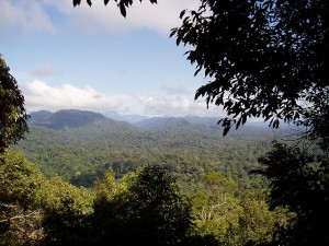 Photosynthesis, especially in tropical rainforests, is hugely beneficial to us.