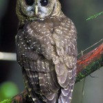 An Owl decorated service starts a sparkling mystery