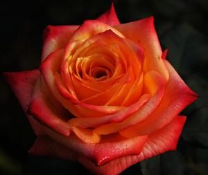 Valentines_Day!_(4352827375)